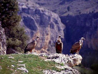 Vencinautic Ornitología
