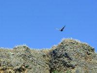 学习一切与鸟鸟类路线