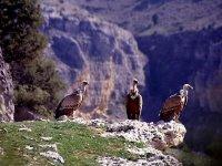 Percorsi ornitologici