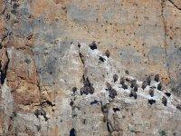 Senderismo y ornitología