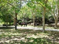 Horses in Burgos