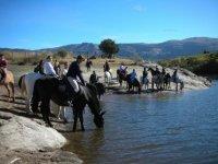 Horses drinking in Segovia
