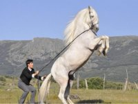Long reins in Segovia