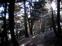 在森林中漫步