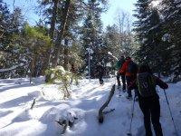 Subiendo hacia el bosque nevado