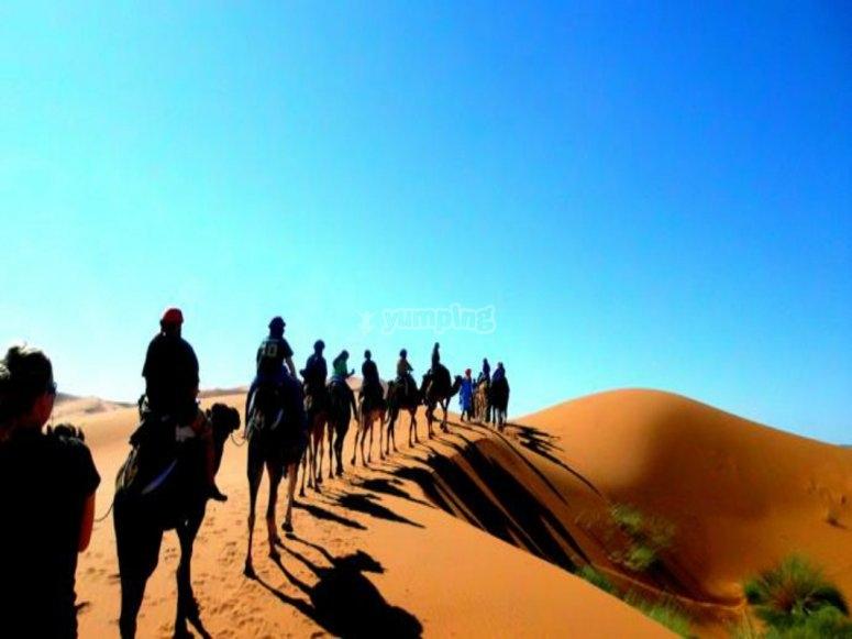 paseos en camello.