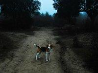 Tu perro de caza