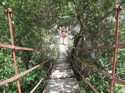 Visita guiada puente colgante de los cachorros