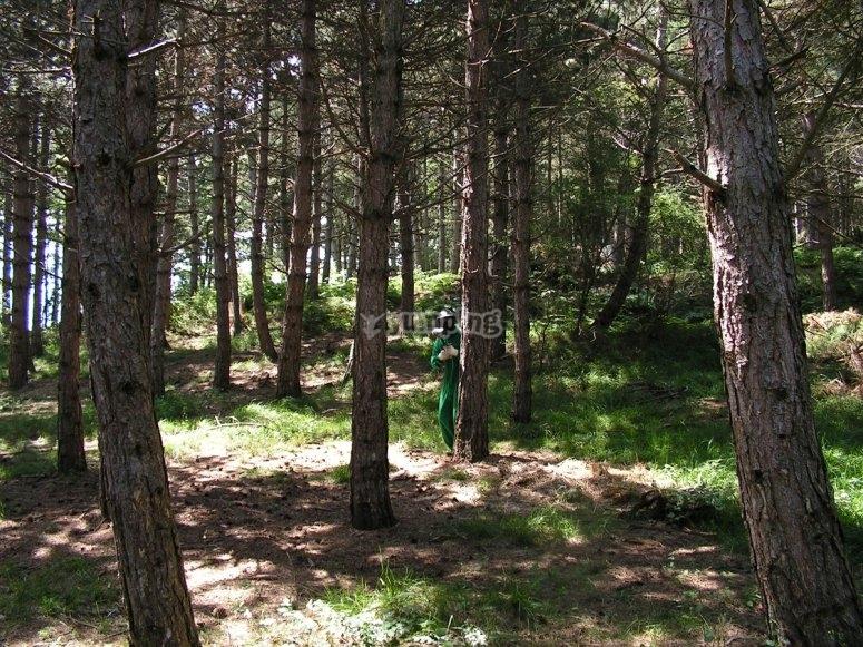 Paintball en el bosque