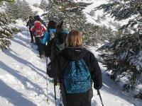 舒适和安静的过境积雪覆盖的树木