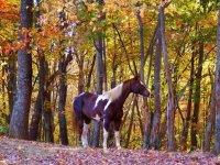 秋季马--999-骑马