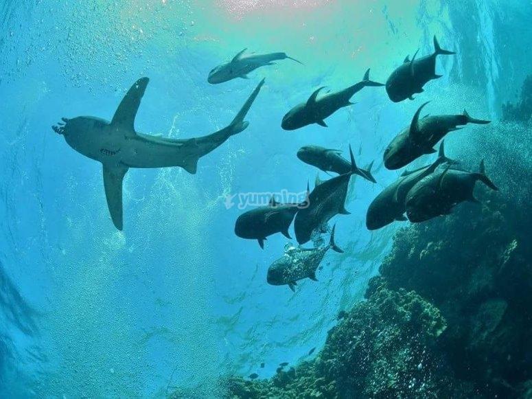 发现圣何塞的海底