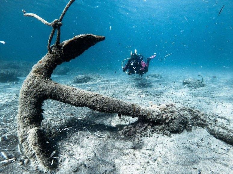 享受圣何塞-999的海底-享受圣何塞(SanJosé)的海洋生物