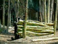 tras la barrera de troncos