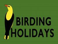 Birding Holidays
