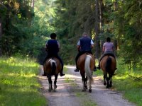 2h horse riding in the Natural Park of Collserola