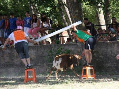 Capea in Andorra, Teruel, w/cattle farm views