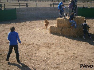 Bullfight in Andorra, Teruel + menu & free drinks