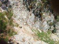 The bottom of the ravine