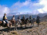 Varios jinetes con sus caballos
