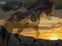 fotomontaje de un caballo y atardecer