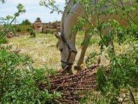 caballo comiendo hierba con un pueblo de fondo