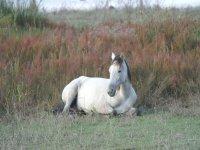 un caballo blanco sentado en el suelo