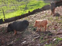 Animales de granja en la finca