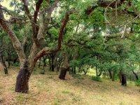Arboles y naturaleza