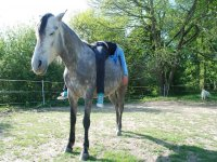 Yoga relaxation and self-knowledge with horses