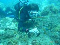 从海滩,福恩吉罗拉海上潜水的洗礼