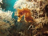 Diving immersion + equippment rent Fuerteventura