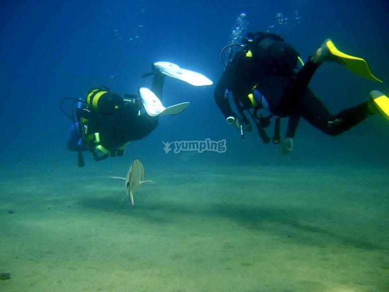 在兰萨罗特潜水