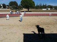 Capea con vaquilla Valdemorillo