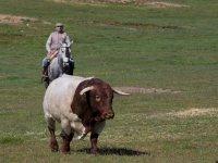 Visitando la ganaderia