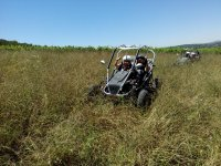 By buggy whilst crossing fields