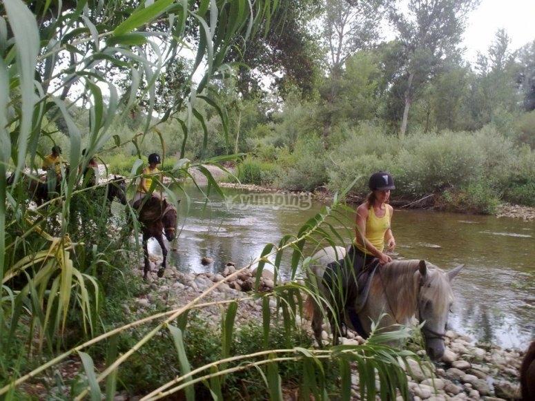 Caballos en el rio en Serinya