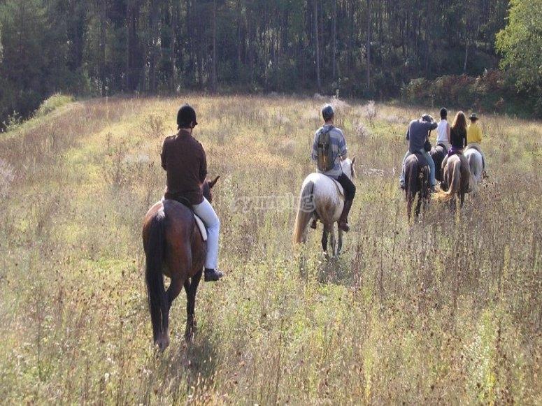 Paseo por el campo con caballos