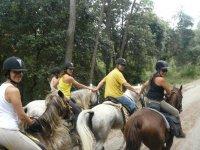 Grupo de caballos en Serinya
