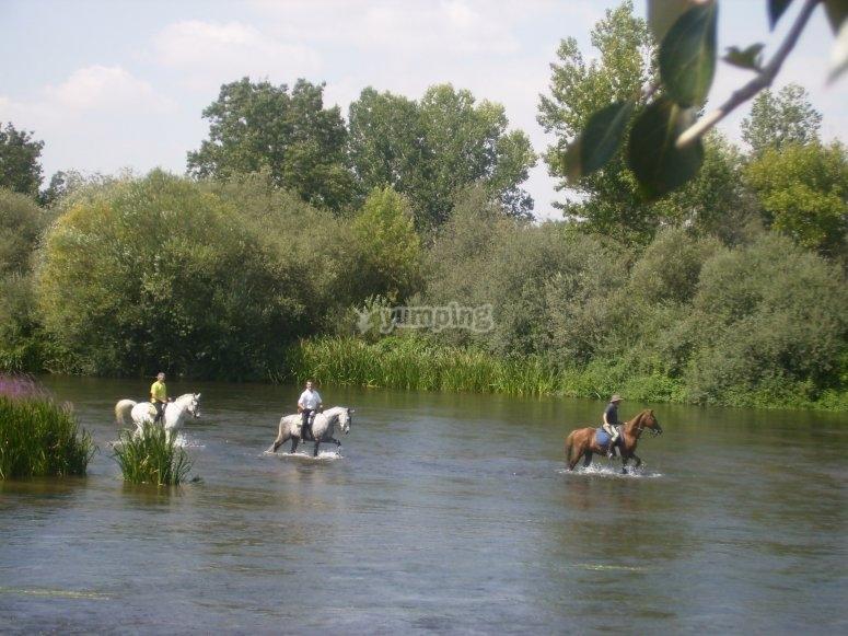 Passeggiate a cavallo sul fiume