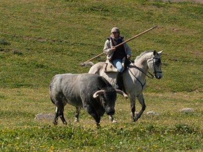Visita ganadería de toros bravos