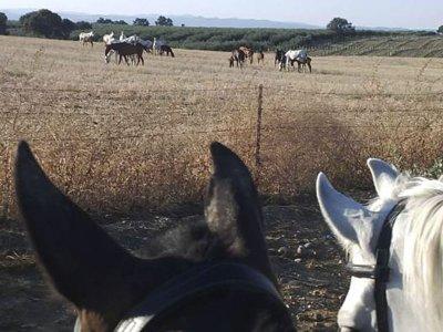 Passeggiata a cavallo con visita allo stallone La Carlota