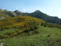 阿斯图里亚斯景观