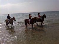 随着马匹在水中