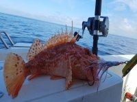 Pesca de altura desde Porto Cristo