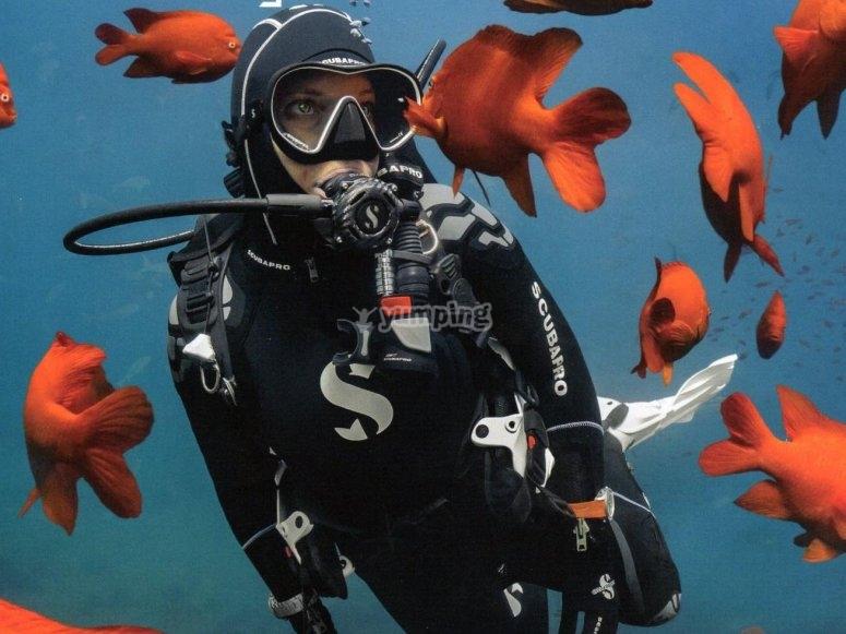 被鱼包围的潜水员