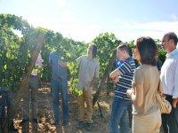 Visita a los viñedos de Tomelloso