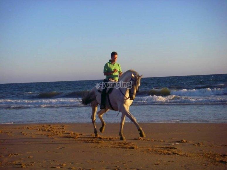 在海滩上的马