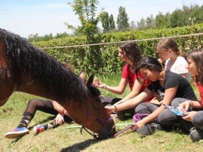 Horse rinding + English camp, 10 days, Palencia