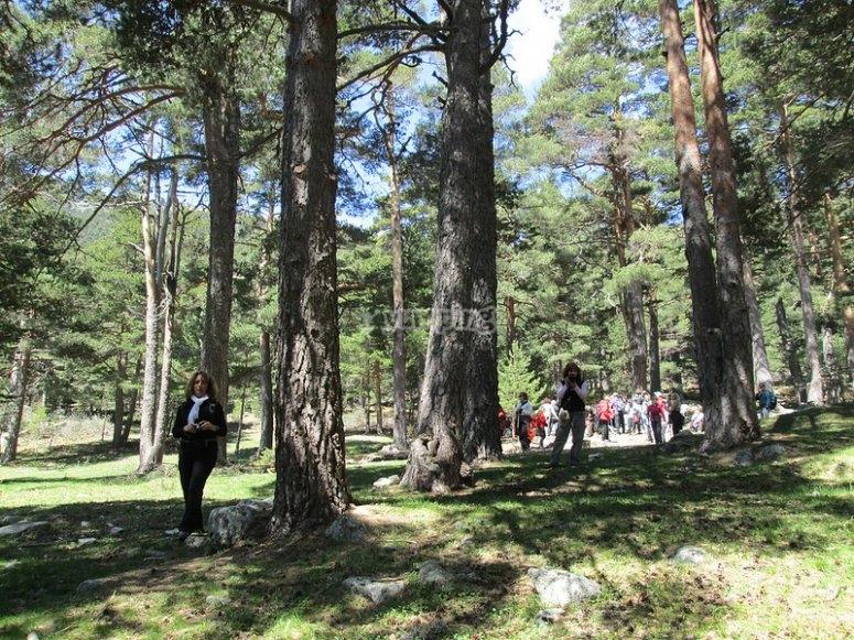 Barranca trees